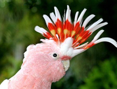 صور طيور جميلة (1)