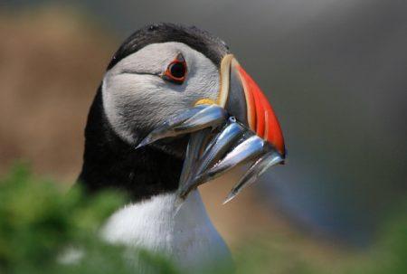 صور طيور جميله (2)