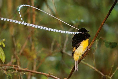 صور طيور جميله (3)