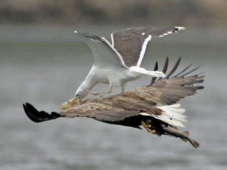 من الطيور الجميلة (1)