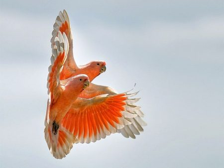 من الطيور الجميلة (2)