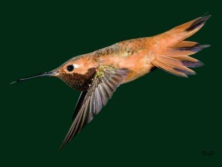 من الطيور الجميلة (3)