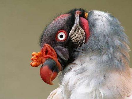 احدث صور طيور جميلة ملونة خلفيات ورمزيات (1)