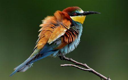 احدث صور طيور جميلة ملونة خلفيات ورمزيات (2)