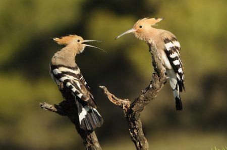 احدث صور طيور جميلة ملونة خلفيات ورمزيات (3)