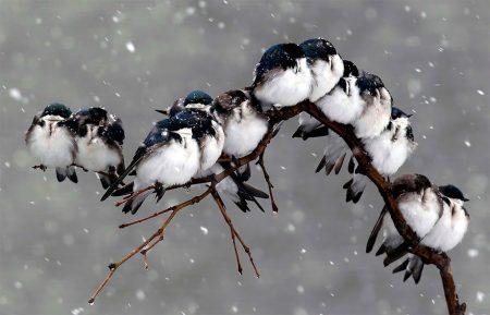 احلي رمزيات طيور (1)
