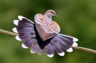 احلي رمزيات طيور (2)