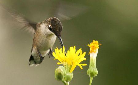 احلي طيور (1)