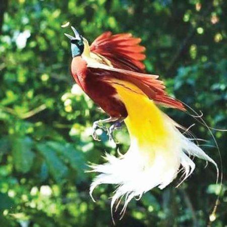 احلي واجمل صور طيور (1)
