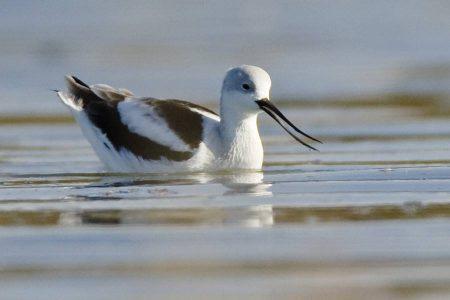 احلي واجمل صور طيور (2)