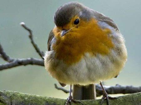 انواع طيور مختلفة (1)