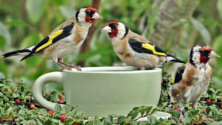 رمزيات طائر (1)