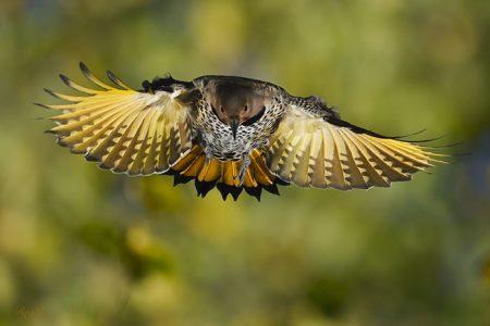 رمزيات طائر (2)