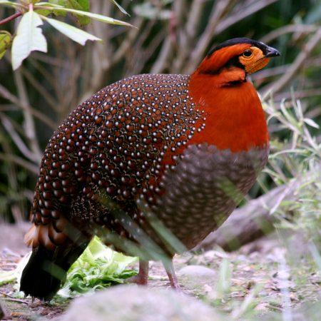 صور انواع الطيور خلفيات ورمزيات طيور ملونة (1)