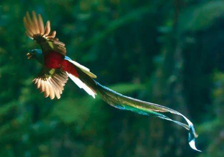 صور انواع الطيور خلفيات ورمزيات طيور ملونة (3)