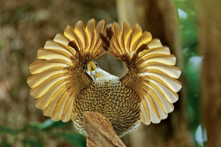 صور طيور جميلة (2)