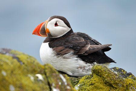 صور طيور جميلة (3)