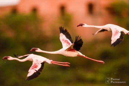 طيور حلوة (2)