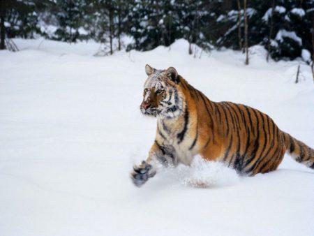 صور عن الشتاء hd (1)