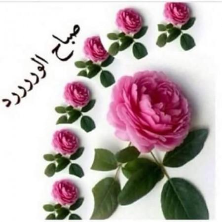 رمزيات صباحية للواتس اب صباح الورد (2)