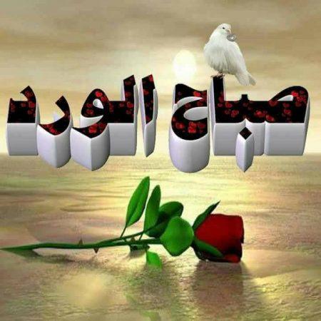 صباح الورد رمزيات انستجرام صباحية (2)