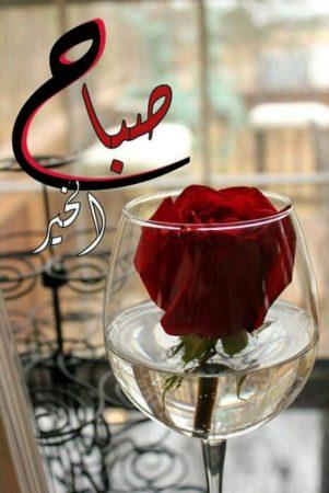 صباح الورد رمزيات انستقرام صباحية (2)