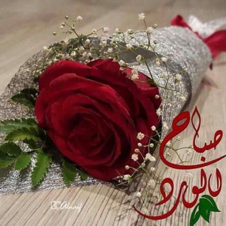 صور صباح الورد 2018 رمزيات صباح الورد والفل والياسمين (1)