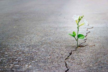 صور معبرة عن الأمل (2)