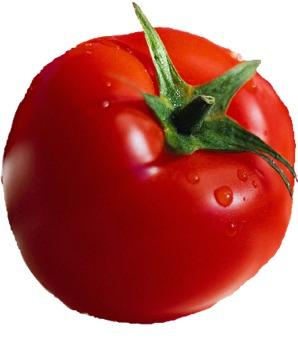 طماطم صور (2)