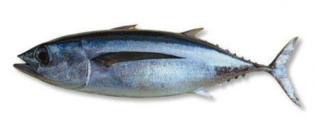رمزيات سمك تونه (1)