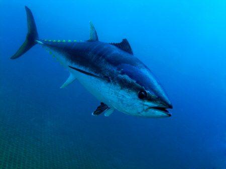 رمزيات سمك تونه (2)