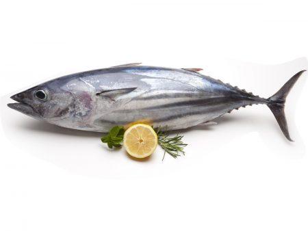 صور سمكة التونة (1)