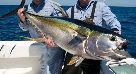 صور سمك التونة رمزيات و خلفيات سمكة التونة (1)