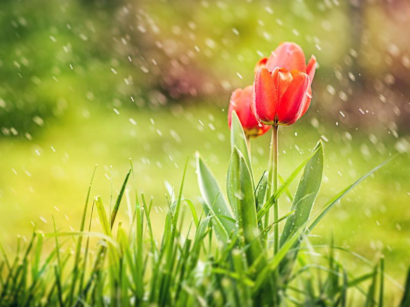 احلي صور قطرات مطر 2