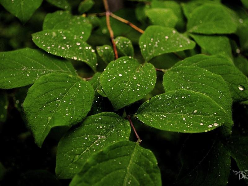 صور للمطر 3