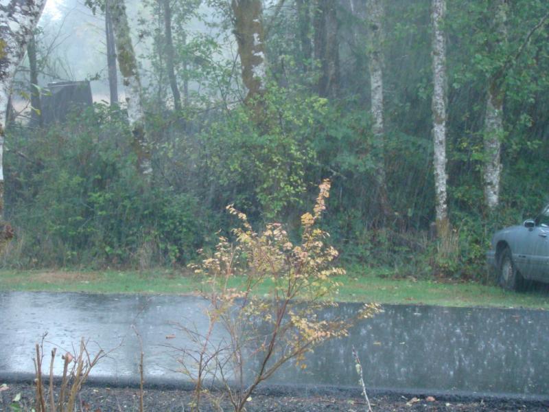 صور مطر 1