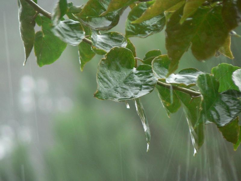 مطر صور 3